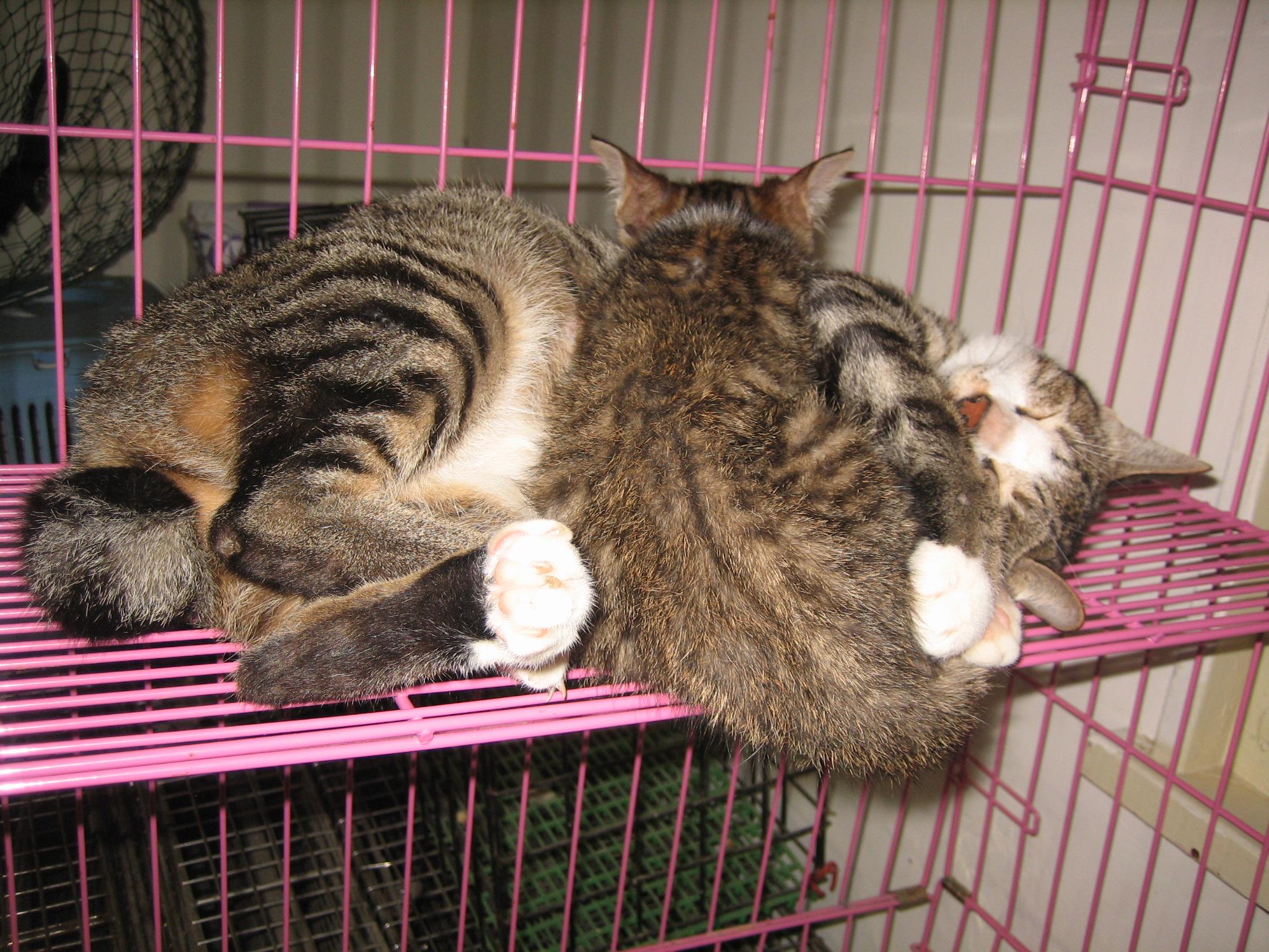 蛋蛋超级照顾小猫咪的,常常和小猫咪们抱在一起睡觉觉